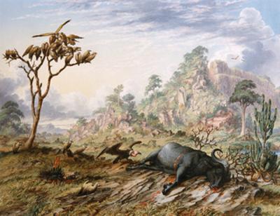 Dead Buffalo by Thomas Baines