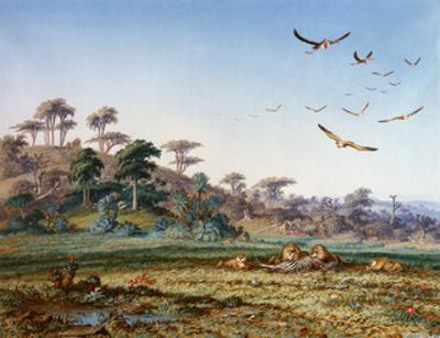 Lions and Dead Quagga by Thomas Baines