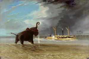 'Ma Robert' and Elephants in the Shallows of the Shire River, 1858 by Thomas Baines