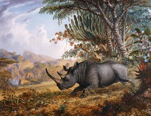 The Black Rhinoceros Charging by Thomas Baines