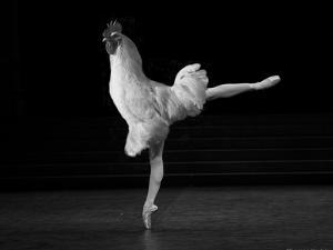 Beautiful Cock by Thomas Barbey