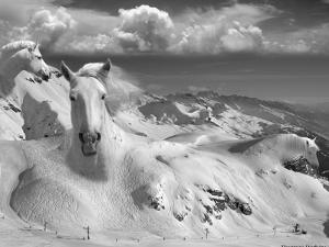 Icy Studs by Thomas Barbey