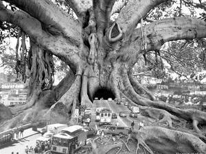 Tourist Trap by Thomas Barbey