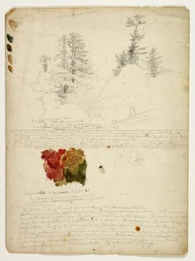 Beautiful Groups of Pines; Tints from Maples, New Hampshire, September 30th 1828 by Thomas Cole