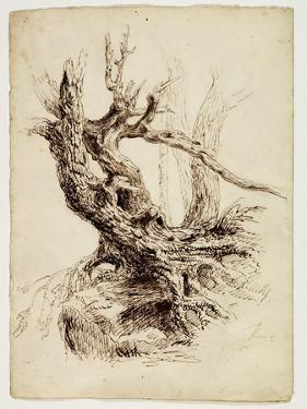 Gnarled Tree Trunk, C.1826 (Pen and Brown Ink over Graphite Pencil on Cream Wove Paper) by Thomas Cole