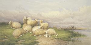 Sheep in the Water Meadows by Thomas Cooper