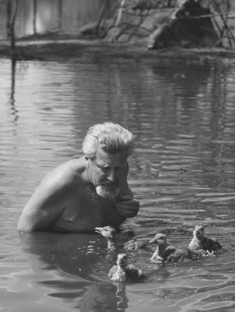 Dr. Konrad Lorenz, Viennese Animal Behaviorist, Surrounded by Family of Graylag Goslings by Thomas D. Mcavoy