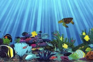Save Our Reefs by Thomas Deir