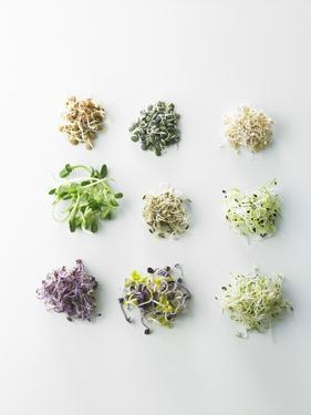 Nine Different Types of Sprouted Seeds by Thomas Dhellemmes