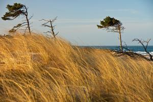 Dar?er Place Coast in Morning Light by Thomas Ebelt