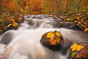 Forest, Stream, Rapids by Thomas Ebelt