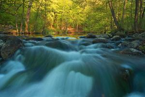 Rapids by Thomas Ebelt