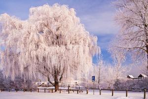 Rime, Trees, Rettin, Schleswig-Holstein by Thomas Ebelt