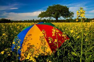 Sunshade, Brightly, Rest in the Colza Field at the Schleswig-Holstein County by Thomas Ebelt