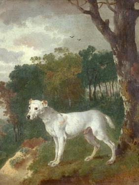 """""""Bumper"""", a Bull Terrier, 1745 by Thomas Gainsborough"""