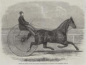 Jackey, the Winner of the Late Aintree Trotting Stakes at Liverpool by Thomas Harrington Wilson