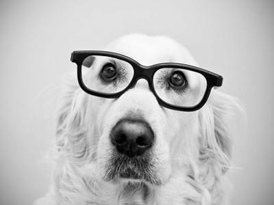 Nerd Dog by Thomas Hole