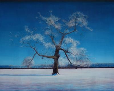 Frozen Oak by Thomas Lamb
