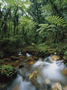 Creek Running Through Montane Rainforest, Bwindi Impenetrable Nat'l Park, Uganda by Thomas Marent/Minden Pictures