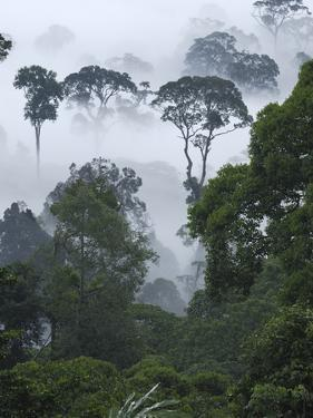 Dawn with Fog at Lowland Rainforest, Danum Valley Conservation Area, Borneo, Malaysia by Thomas Marent/Minden Pictures