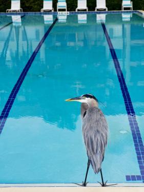 Heron at Pool by Thomas Winz