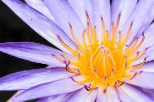 Lotus by thongchaipeun
