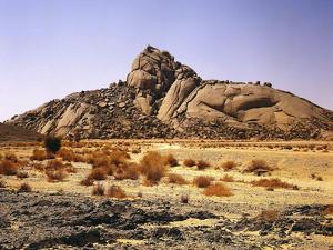 Algeria, Sahara, Rock Desert, Vegetation, Meager, Grasses, Shrubs by Thonig