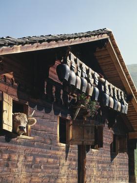 Alpine Hut, Cow, Bells by Thonig