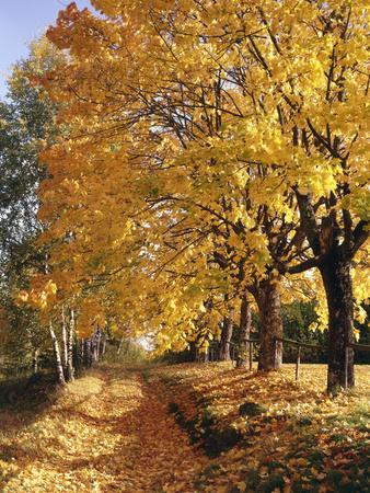 Autumn Scenery, Country Lane, Broad-Leaved Trees
