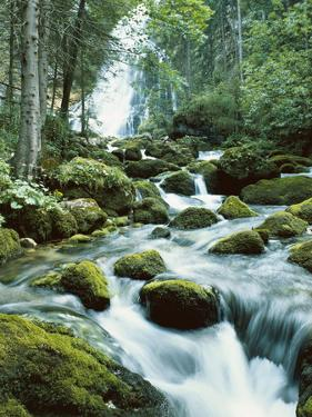 Forest, Torrent, Stones, Moss by Thonig