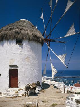 Greece, Mykonos, Mykonos City, Windmill, Donkey by Thonig