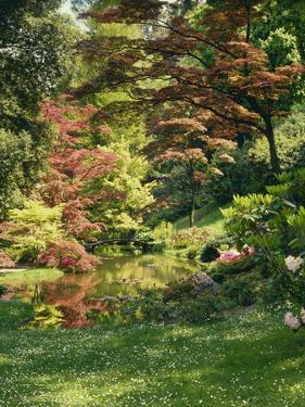 Japanese Garden by Thonig