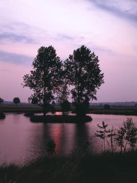 Lake, Island, Trees, Evening Mood by Thonig