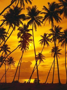 Palm Beach, Sundown, Back Light by Thonig
