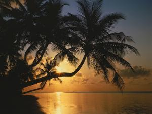 Palmenstrand, Sonnenuntergang, Meer, Ufer, Palmen, Abendsonne, Urlaub by Thonig