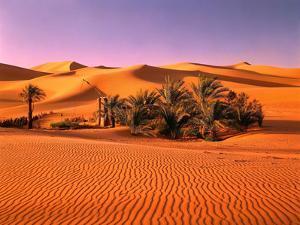 Sahara, Black Bug, Toktokkie, Sand by Thonig