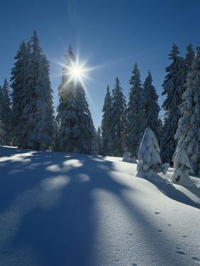 Wald, Winterlandschaft, Waldrand, Bv¤Ume, Natur, Botanik, Winter by Thonig