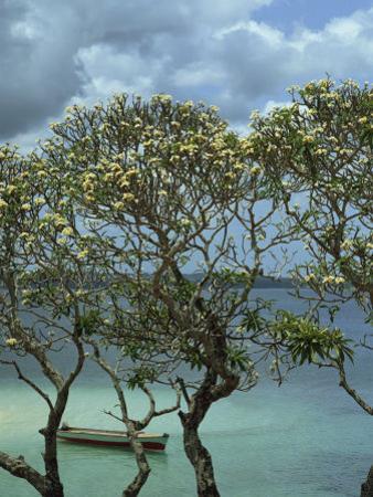 Frangipani Trees and Wooden Boat, Prison Island, Zanzibar, Tanzania, East Africa, Africa