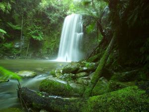 Beauchamp Fall, Waterfall in the Rainforest, Otway N.P., Great Ocean Road, Victoria, Australia by Thorsten Milse