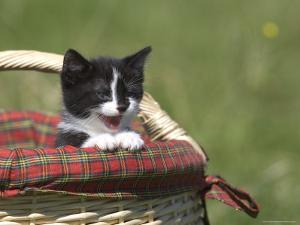 Cat, Lemgo, Germany by Thorsten Milse