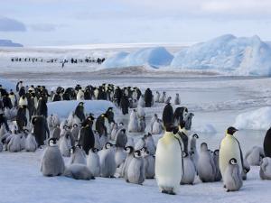 Colony of Emperor Penguins (Aptenodytes Forsteri), Snow Hill Island, Weddell Sea, Antarctica by Thorsten Milse