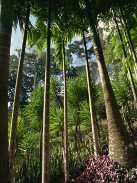 Balata Gardens, Martinique, West Indies, Caribbean, Central America by Thouvenin Guy