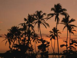 Coconut Palms, Boca Chica, South Coast, Dominican Republic, West Indies, Central America by Thouvenin Guy
