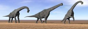 Three Brachiosaurus Dinosaurs Standing in the Desert