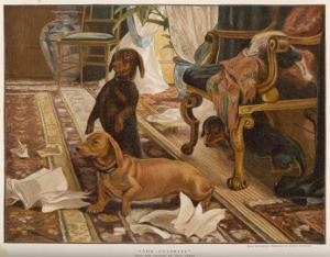 Three Dachshunds Have a Great Time with Master's Papers