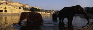 Three Elephants in the River, Amber Fort, Jaipur, Rajasthan, India