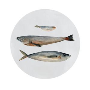 Three Fish II