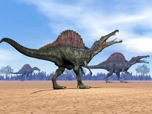 Three Spinosaurus Dinosaurs Walking in the Desert