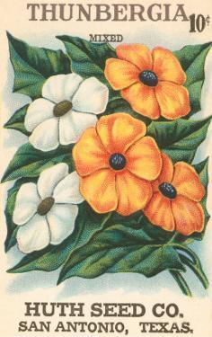 Thunbegia Seed Packet