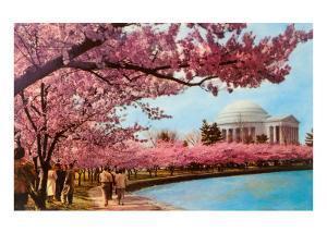 Tidal Basin, Jefferson Memorial, Cherry Blossoms, Washington, D.C.